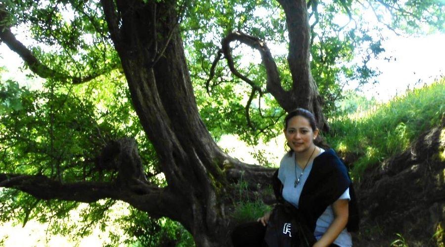 Conoce y abraza a un árbol